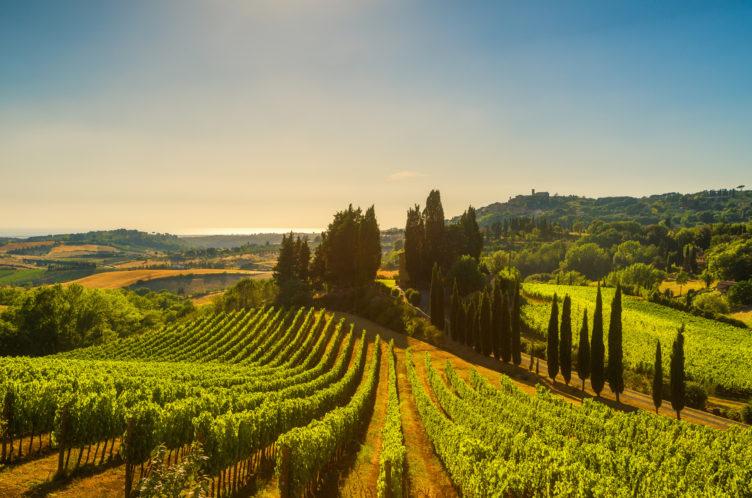 Vingård Italia
