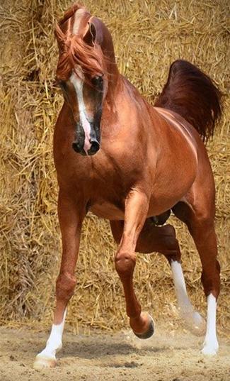 Rami's Equestrian Club