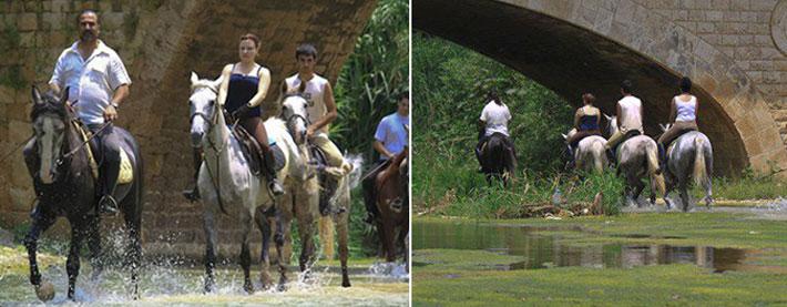 River Ranch Riding School