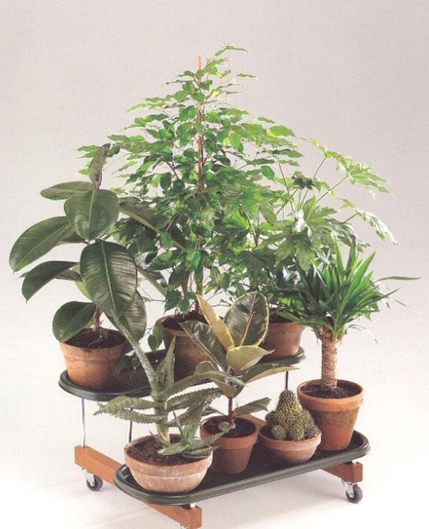 Pollice Planter, Zanotta - Deesup
