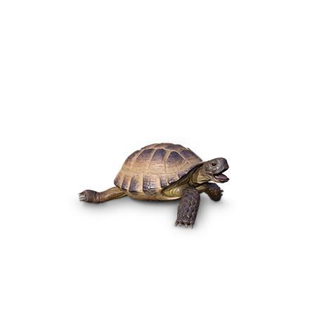 Square Alvin Turtle