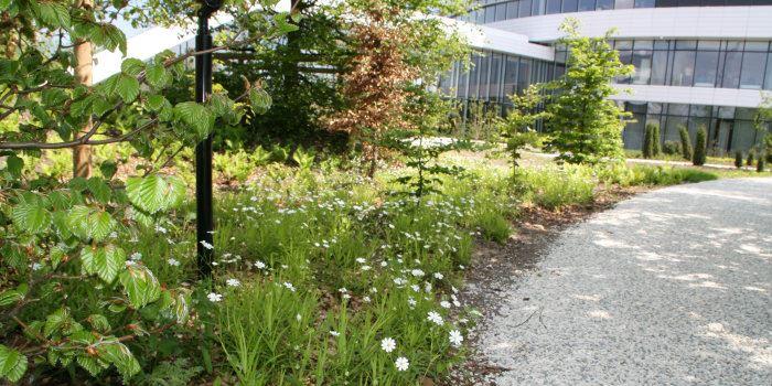 Urban Green-biotoperne omkring Novo Nordisk