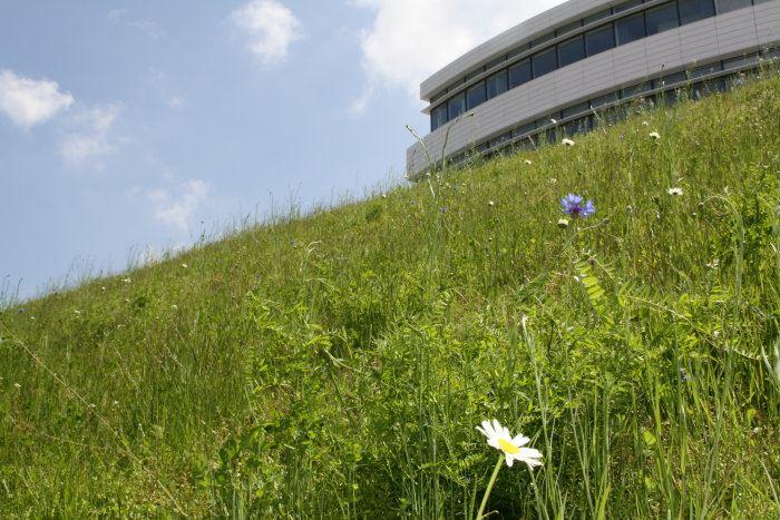 Urban Green-biotoperne omkring Novo Nordisk Domicilet er designet til at tiltrække forskellige bestøvende bier, sommerfugle og fugle