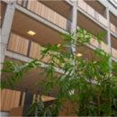 Bambus har i mange år været et nicheprodukt, men nu indgår det bæredygtige materiale