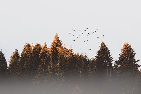 Skovejer fik halveret sin rente