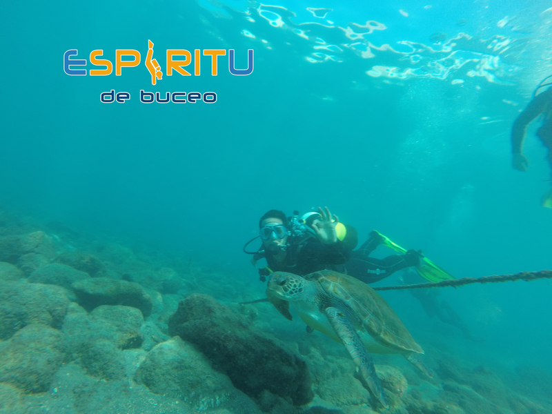 1 BUCEO