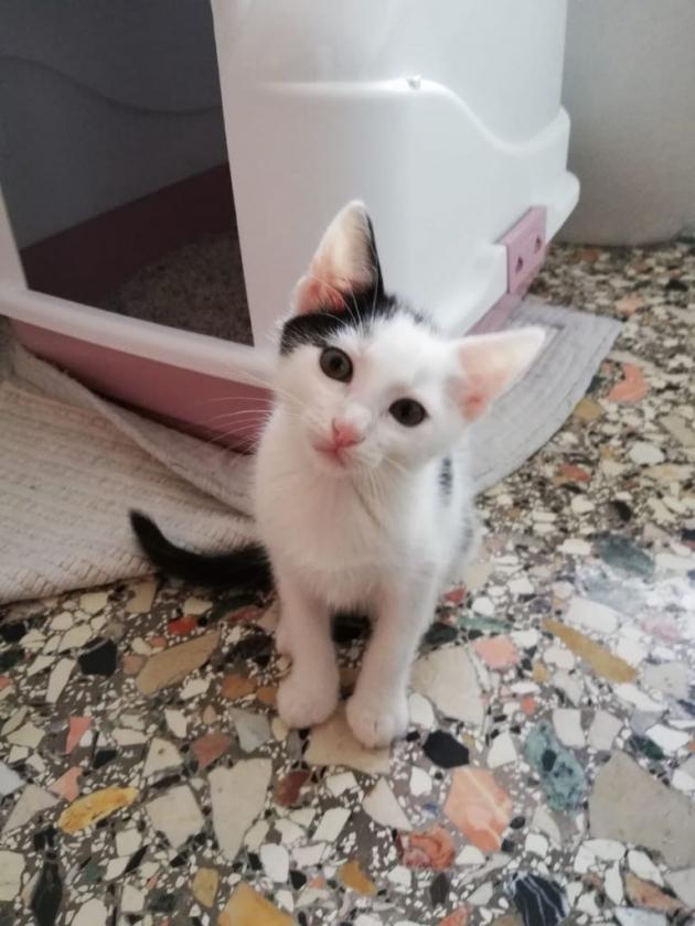 Animali in difficoltà: Interspar e Comune di Padova promuovono una raccolta di cibo e accessori