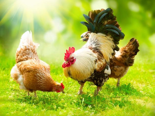PASSO DOPO PASSO: 4 passi per mangiare carne sicura.