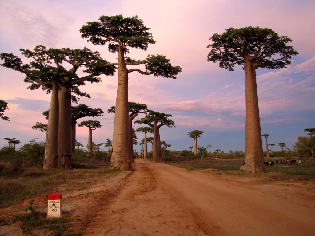 l-allee-des-baobabs...