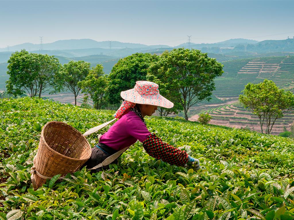 Sugerencia Yunnan 1...