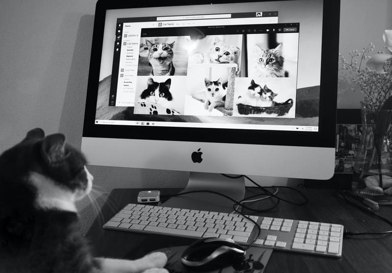 gatti che comunicano tramite pc