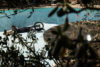 GARRETT BYRNES BMX MMPOOLS CALIFORNIA SAFE RD