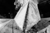 steven hamilton BMX alleyoop animal argentina13 DG94 RD