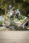 Jeff Wescott X Dig San Diego Tree 180 Wm 1