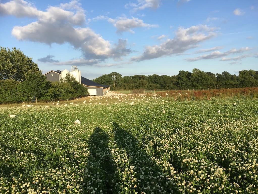 kokærgård kløvermark.jpg