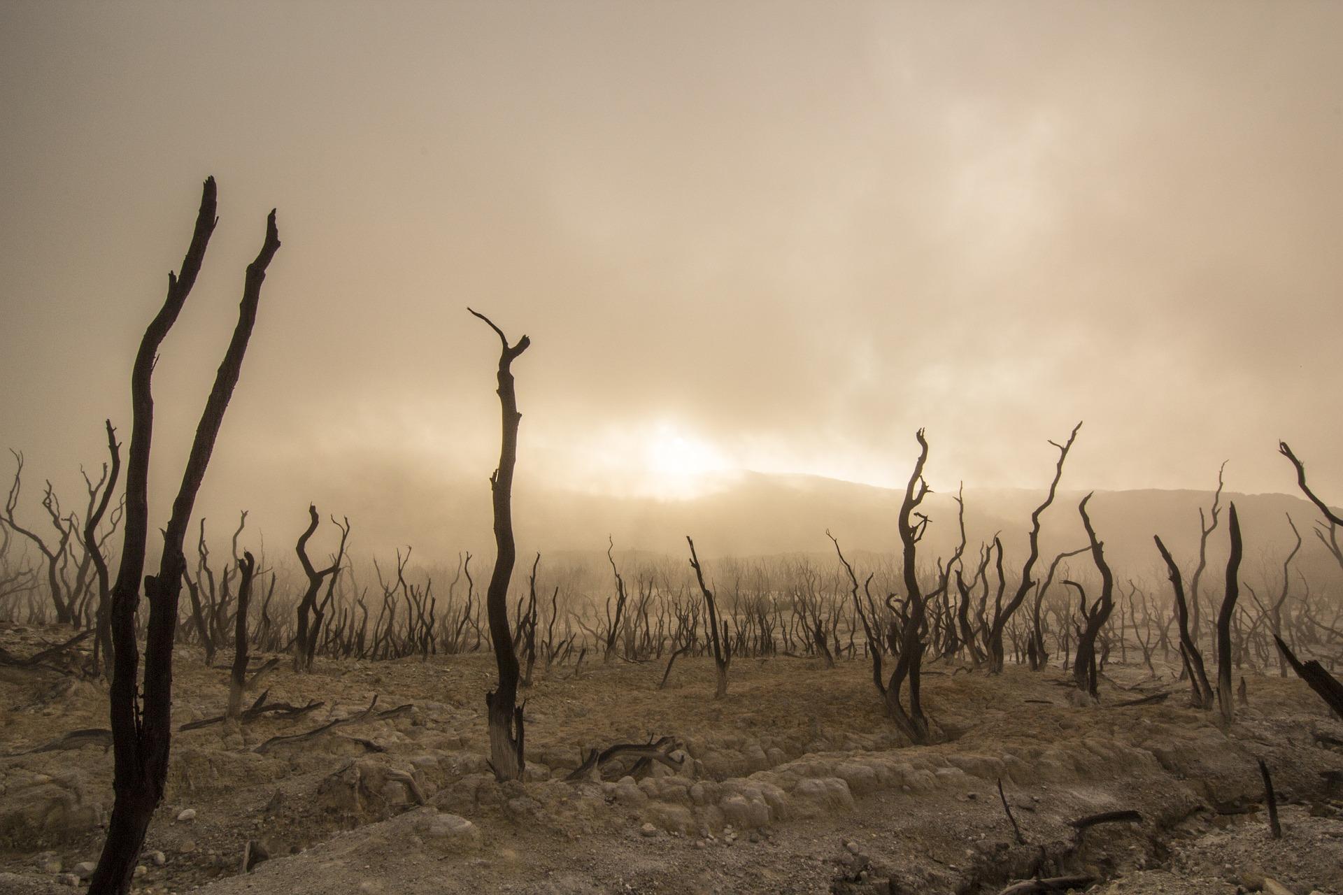 dead-trees-947331_1920.jpg