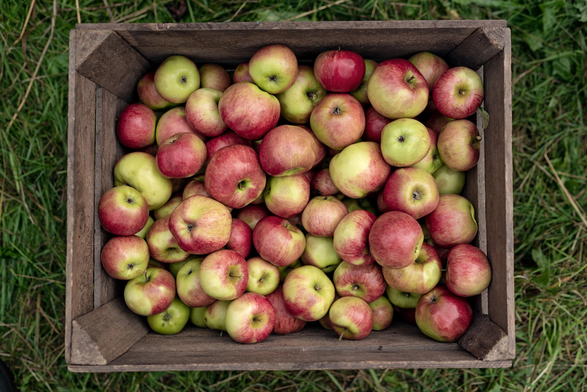 møn økologisk Æble-02.jpg
