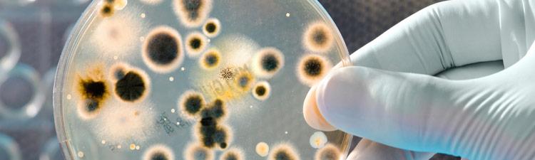 Infeções bacterianas