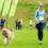 Dog Jog Checklist