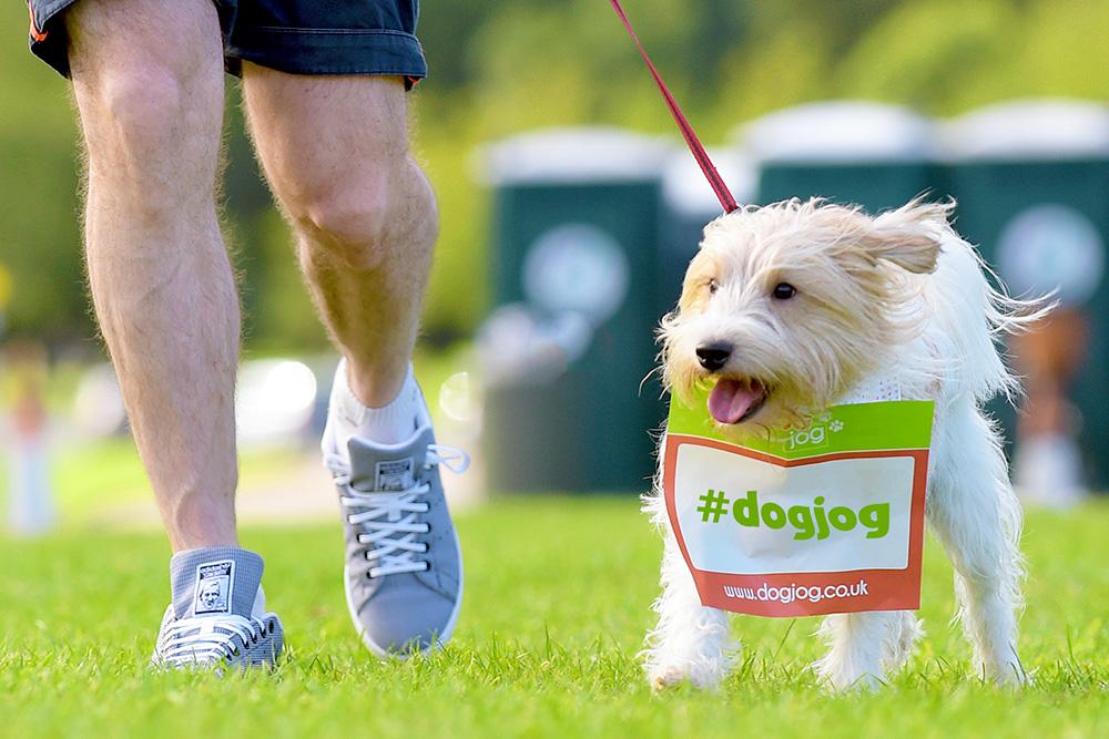 Dog Jog 2017