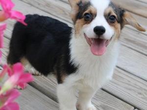 Puppies For Sale In Scarborough Dogsandpuppiescouk