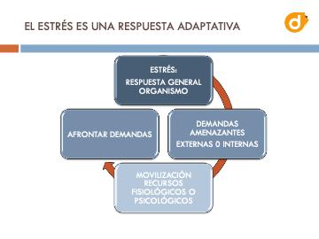dokify homologacion de proveedroes control de estres