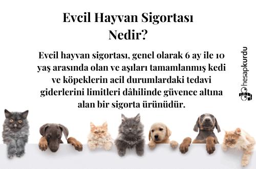 Evcil Hayvan Sigortası İnfografik