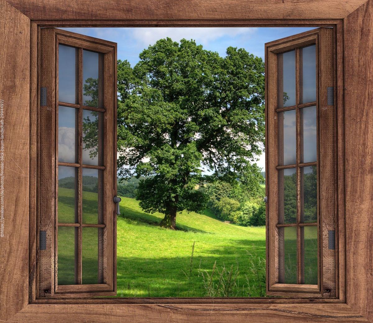 Geöffnetes Fenster mit grünem Baum im Hintergrund