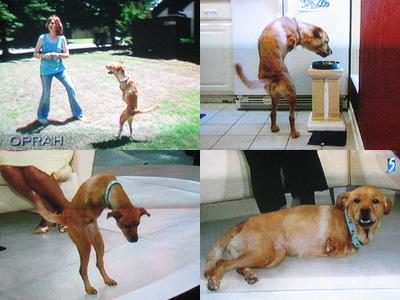 faith il cane a due zampe
