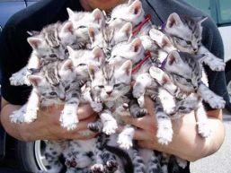 gatti abbandonati