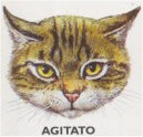 gatto agitato