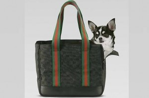 accessori pet gucci.1