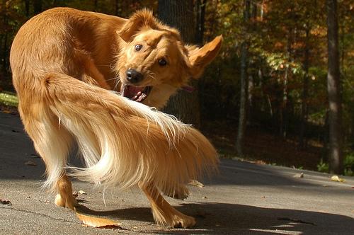cane con disturbo ossessivo