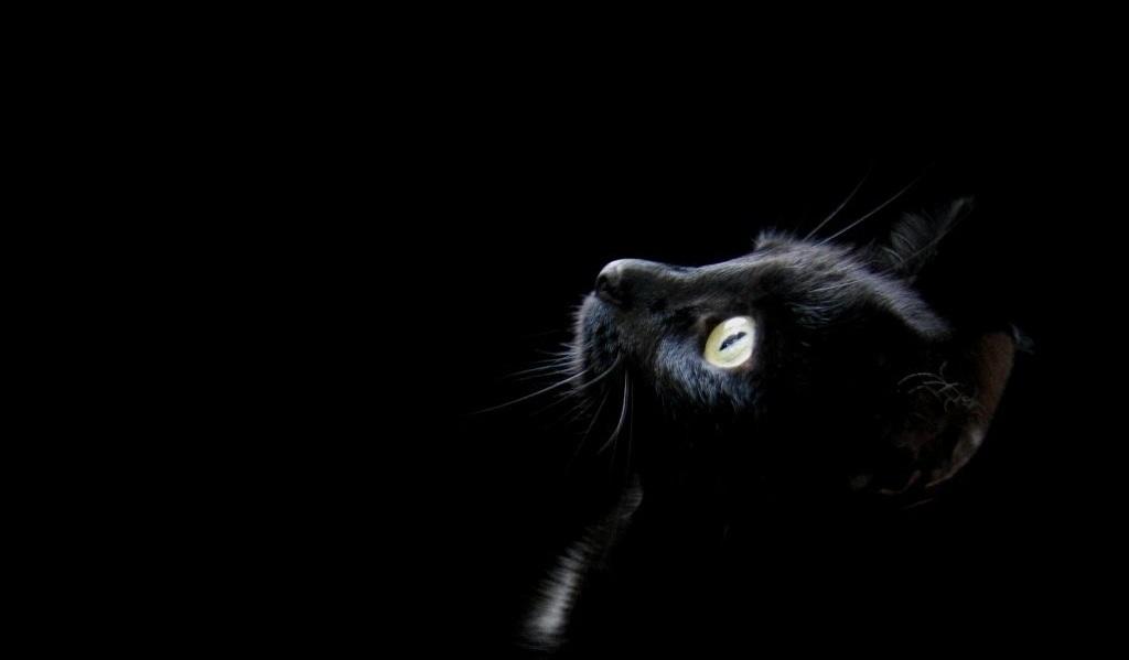 Gatto Squartato A Muggia Sospettati I Satanisti Petpassion