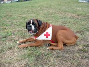 cane croce rossa guardiano