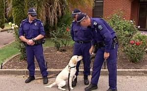 Australia Arrestato Per Aver Baciato In Bocca Un Cane Poliziotto