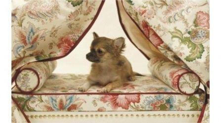 Letti A Baldacchino Per Cani : Alta moda per cani a parigi tra sfilate e aperitivi