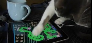 gatto-ipad