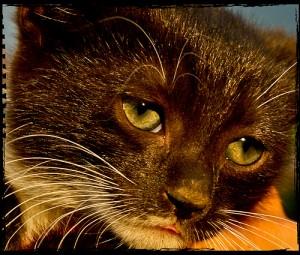 gatto-triste