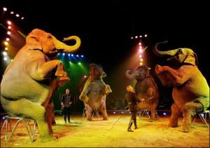 circo-animali