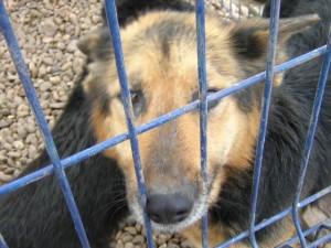 cane-maltrattato