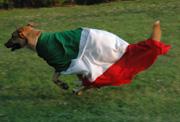 cane con bandiera italiana
