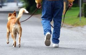passeggiata-con-il-cane