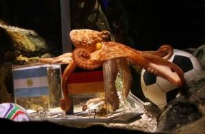 FBL-WC2010-GER-ARG-ANIMALS-THEME-OCTOPUS-OFFBEAT