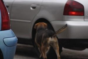 cane solo in strada