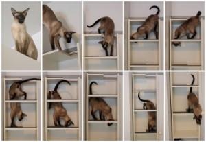 gatto da IKEA