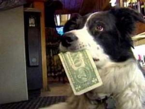 cane con soldi