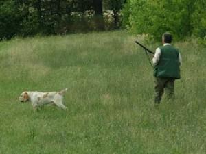 cane_cacciatori