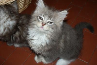 Adozione Animali Mici E Meticci In Cerca Di Casa Petpassion