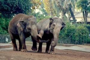 elefantesse2